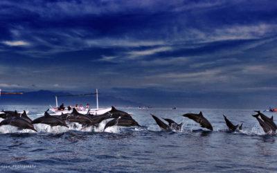 Dolphin Watching Bali